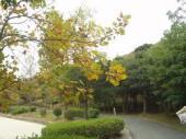 しみじみと。。。「秋」。_b0186183_16534732.jpg