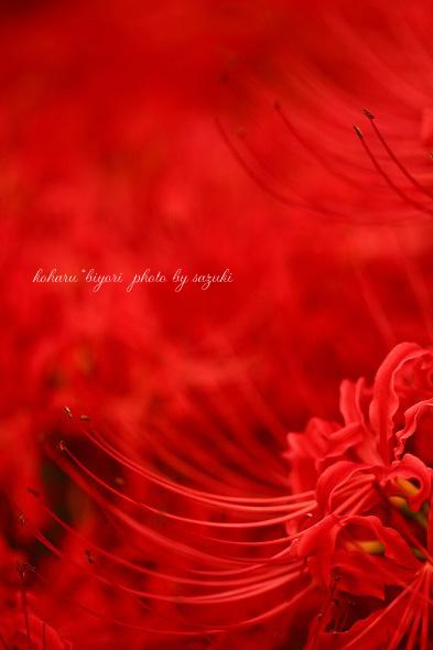 焔~homura~_f0299486_2264981.jpg