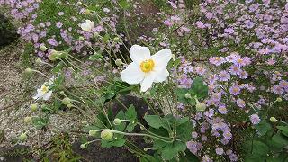 ロックガーデンの花たち27_b0219993_16535781.jpg