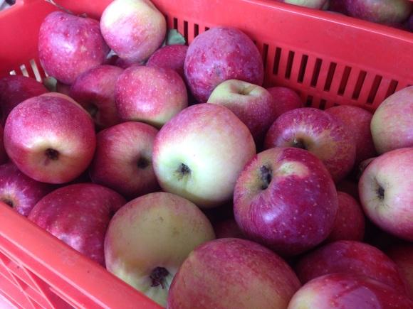 リンゴをお届け_f0106597_03020278.jpg