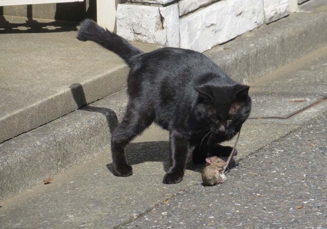 【猫】_f0141609_1036062.jpg