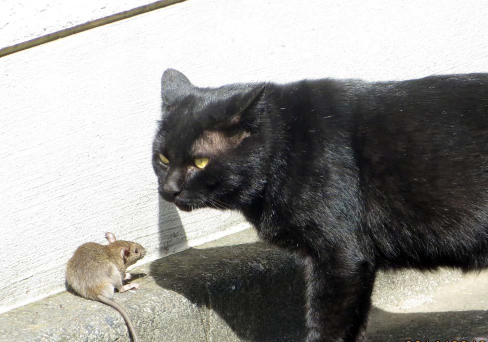 【猫】_f0141609_1036629.jpg