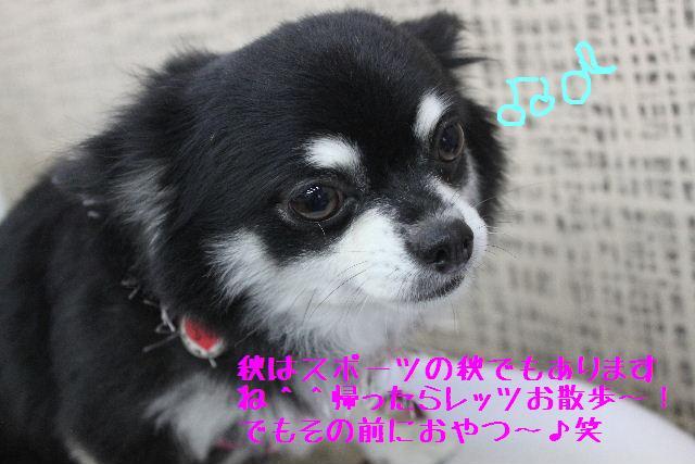 b0130018_17512653.jpg