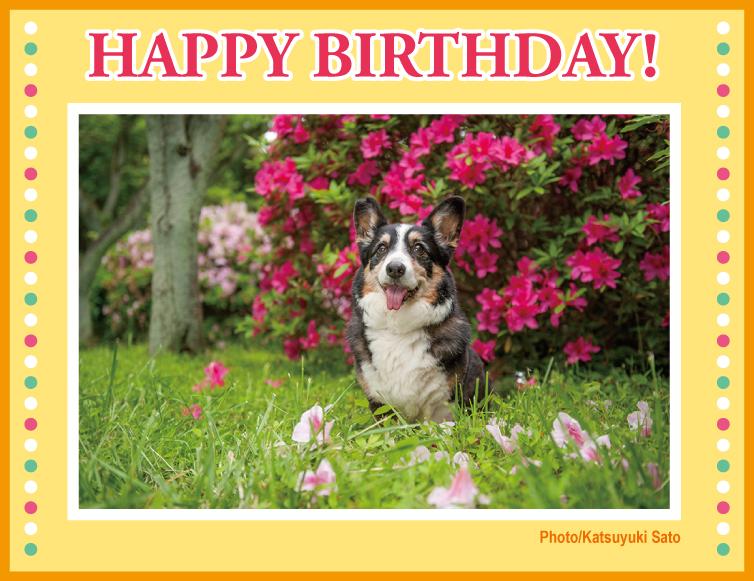 こたろうくん、お誕生日おめでとう♪_d0102523_9385871.jpg