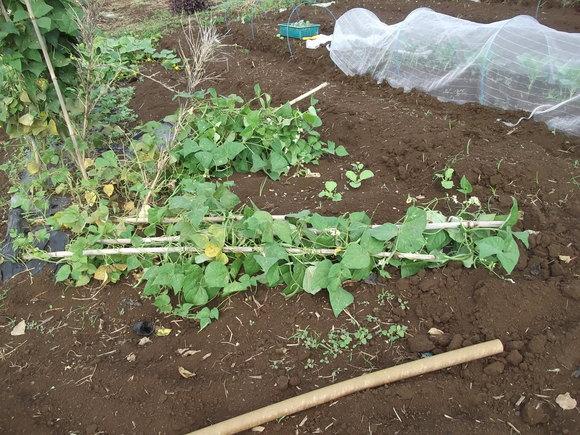 まだ植えています...ブロッコリー&レタス_b0137932_16494664.jpg