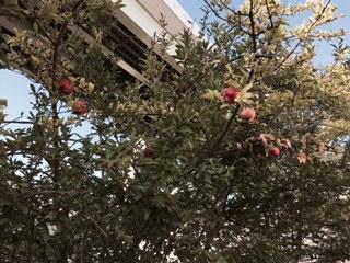秋ですね_f0052181_8265612.jpg