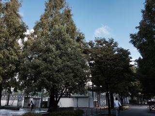 秋ですね_f0052181_8265630.jpg
