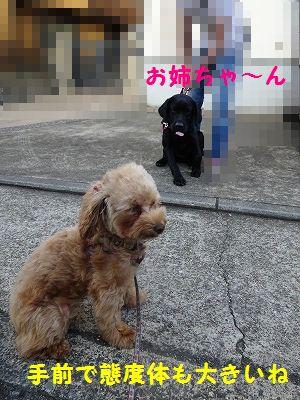 三代目_e0222588_17163207.jpg