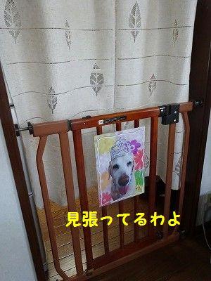 三代目_e0222588_17323453.jpg