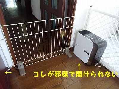 三代目_e0222588_17325774.jpg