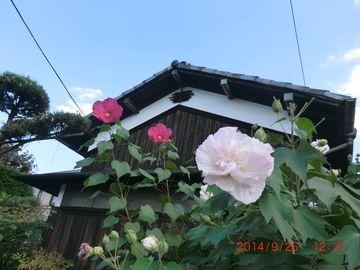 d0051601_00083820.jpg