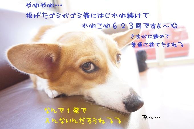 d0220513_16473938.jpg