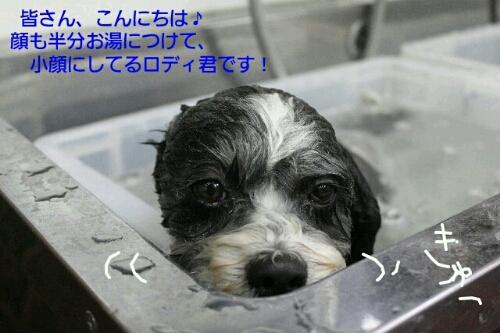 b0130018_20243911.jpg