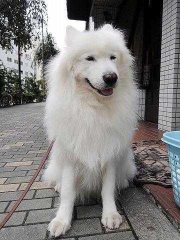 シャキーン! 朝散歩_c0062832_7171865.jpg