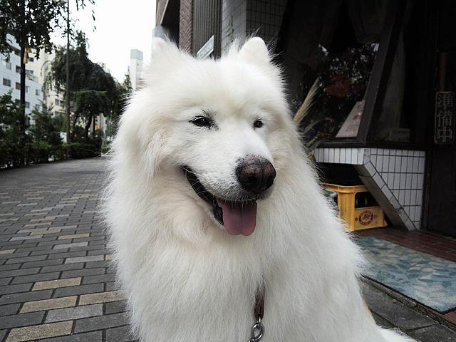 シャキーン! 朝散歩_c0062832_7175073.jpg