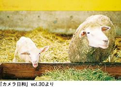 「ひつじ」写真募集!_b0043961_16515235.jpg