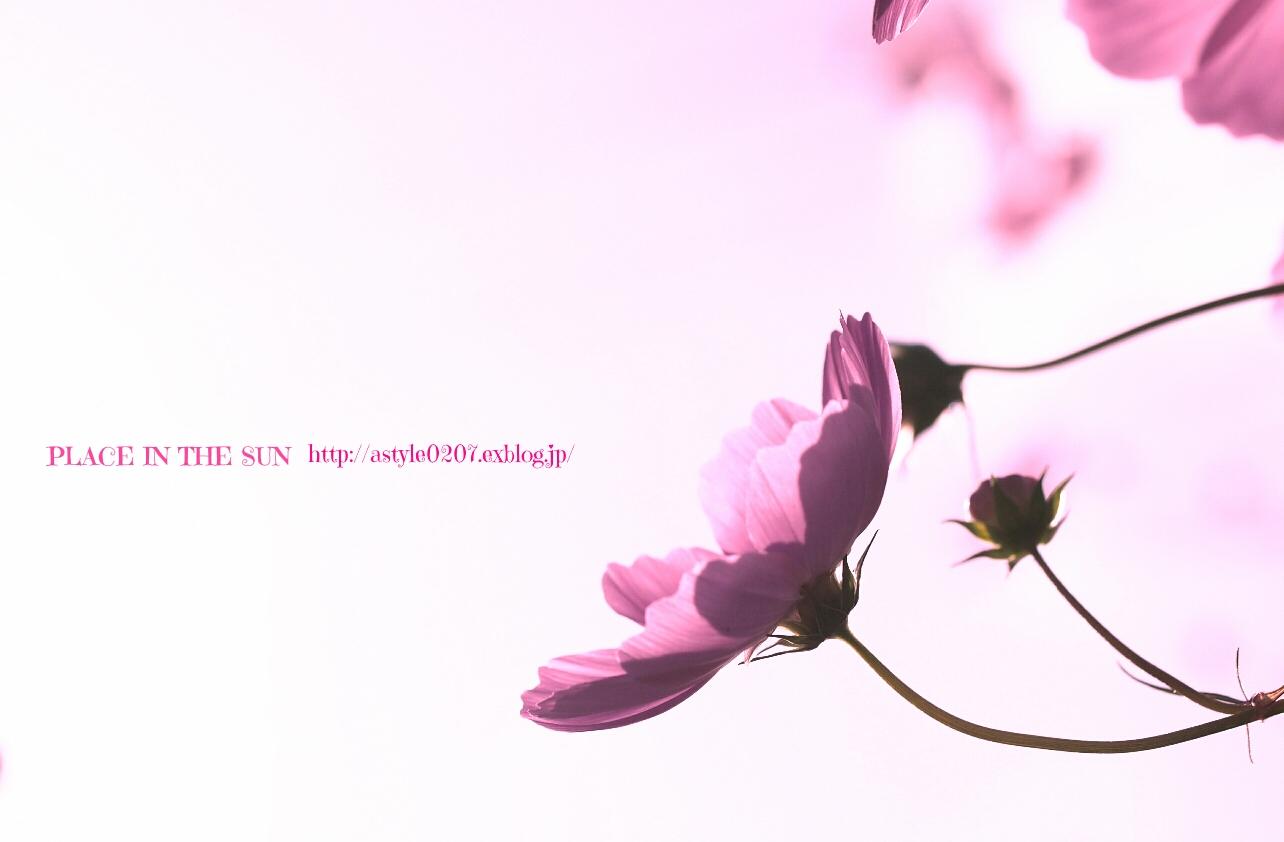 f0310867_12472009.jpg