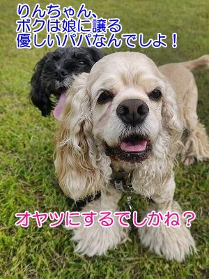 f0326925_00204354.jpg