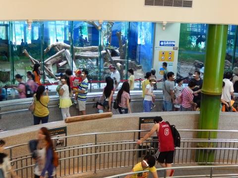 2014年8月香港&台北旅行⑭ 台北市動物園でパンダの圓仔に会う_e0052736_16110187.jpg
