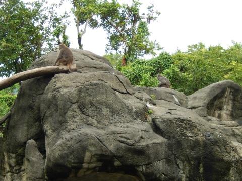 2014年8月香港&台北旅行⑭ 台北市動物園でパンダの圓仔に会う_e0052736_16141775.jpg