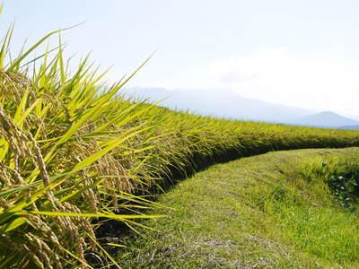 菊池水源棚田米 清らかな水と元気な土で育てた美味い米!まもなく稲刈りです!!_a0254656_17104168.jpg