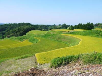 菊池水源棚田米 清らかな水と元気な土で育てた美味い米!まもなく稲刈りです!!_a0254656_1714830.jpg
