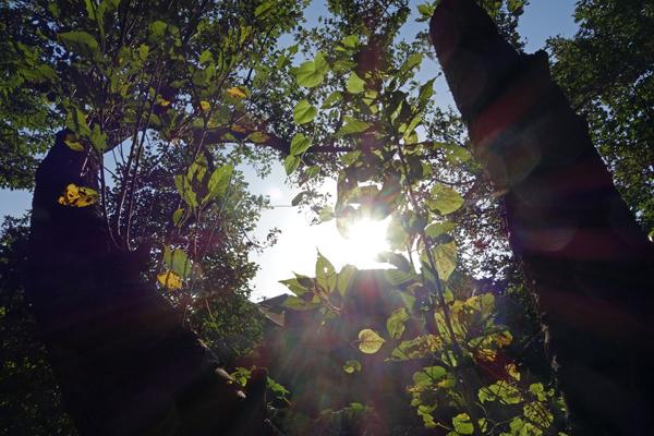 秋の光を感じながら歩きました_f0117059_1916523.jpg