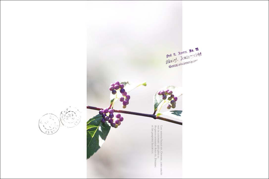 f0198771_23542596.jpg