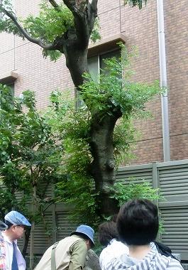 駒込土物店(江戸の食文化)_c0187004_10114568.jpg