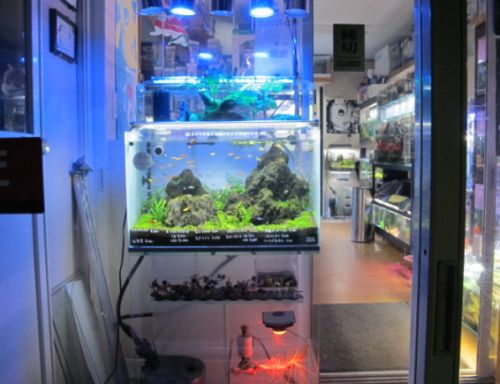 現在の当店、生体、水草販売水槽_a0193105_0561245.jpg