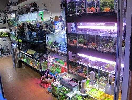 現在の当店、生体、水草販売水槽_a0193105_0563877.jpg