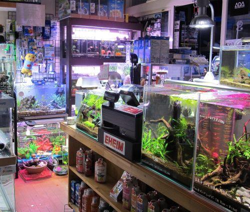 現在の当店、生体、水草販売水槽_a0193105_0573199.jpg