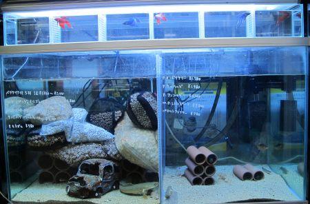 現在の当店、生体、水草販売水槽_a0193105_1179.jpg