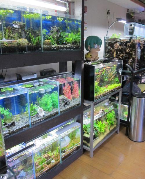 現在の当店、生体、水草販売水槽_a0193105_123035.jpg