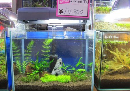 現在の当店、生体、水草販売水槽_a0193105_183493.jpg