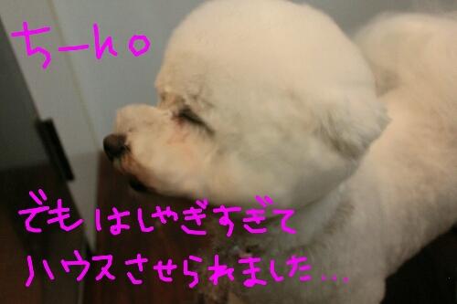 b0130018_17281849.jpg