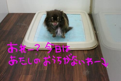 b0130018_1752366.jpg