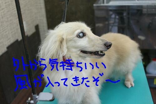 b0130018_1774636.jpg