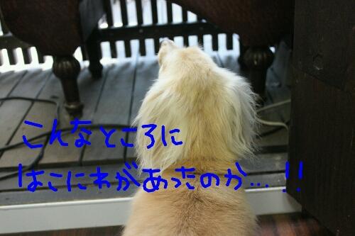 b0130018_1782250.jpg