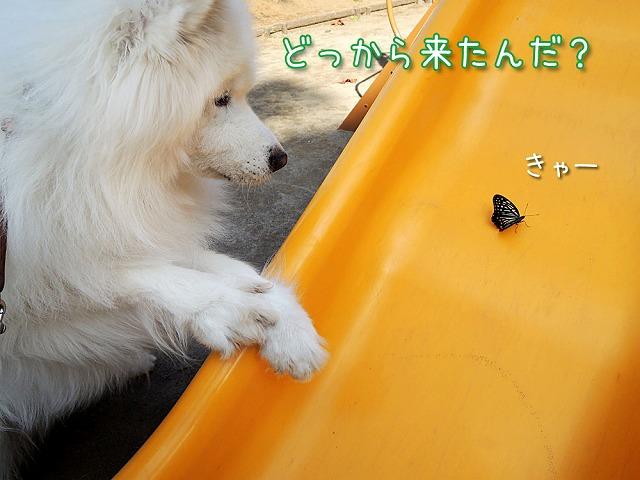 日曜おば散歩_c0062832_6302424.jpg