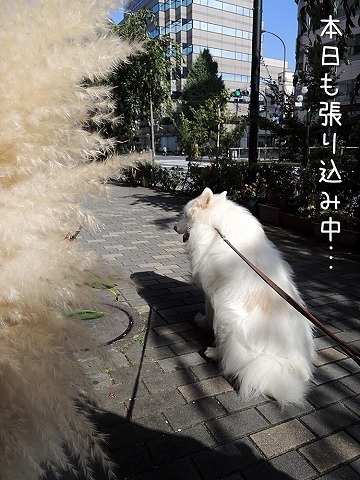 日曜おば散歩_c0062832_630337.jpg