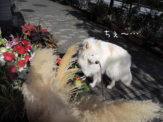 日曜おば散歩_c0062832_631151.jpg