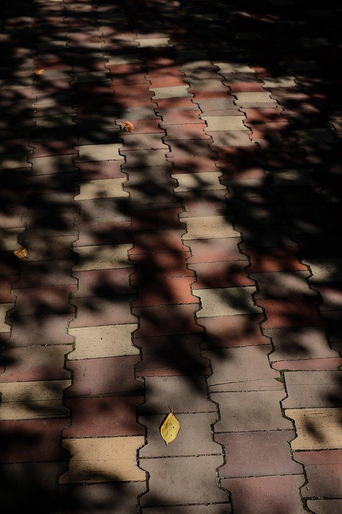 秋の散歩 2 by FUJIFILM x100S_f0050534_07502521.jpg