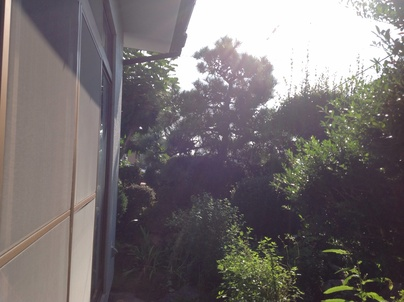 植木剪定_c0186441_2011572.jpg
