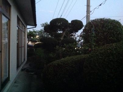 植木剪定_c0186441_2045874.jpg