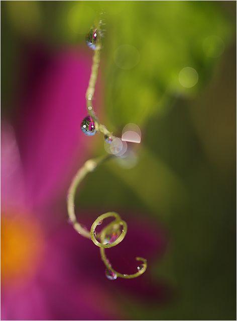 庭の花_a0256349_9202124.jpg