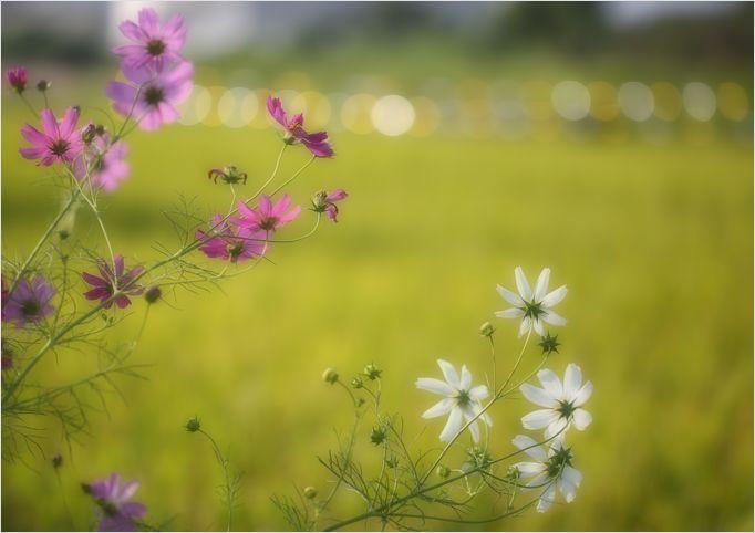 庭の花_a0256349_92028.jpg