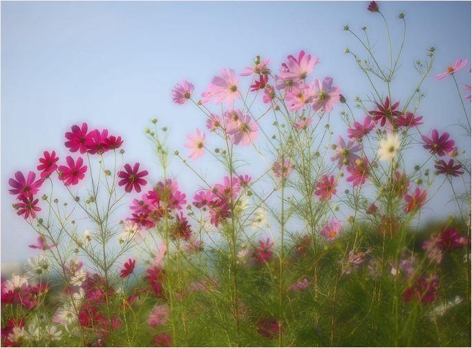 庭の花_a0256349_9492696.jpg
