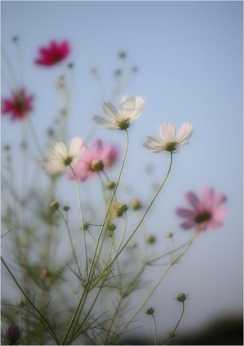 庭の花_a0256349_9533981.jpg