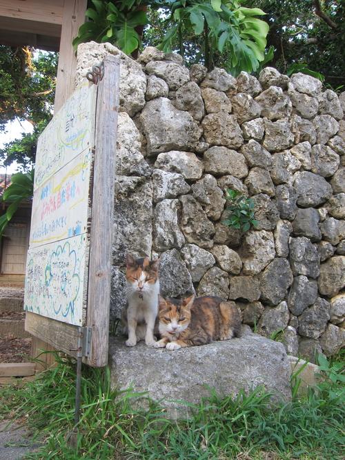 Midori & Momo._c0153966_17535735.jpg